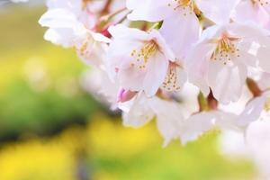 単調な表現になってない?美しい日本語を話そう|話し方教室VOAT【日常会話コース】